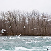 Birds and the Niagara River, New York