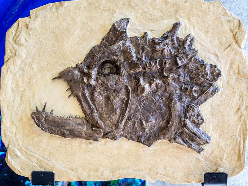 Dinosaur expo in Nicosia