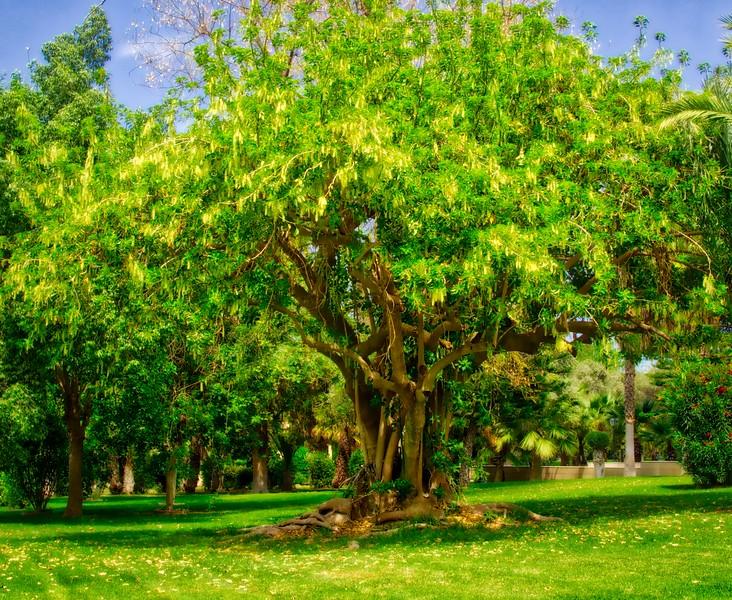 Metochi Kykkou Park