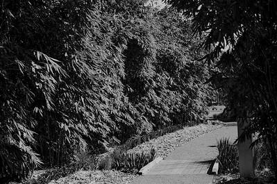 Nikon F3 Black and White Film-December 08, 2009-029
