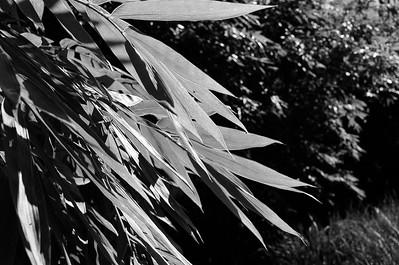 Nikon F3 Black and White Film-December 08, 2009-028