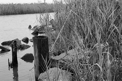 Nikon F3 Black and White Film-December 11, 2009-014