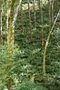 Tillamook Forest