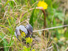 Unidentified Wildflower - Point Reyes, CA, USA