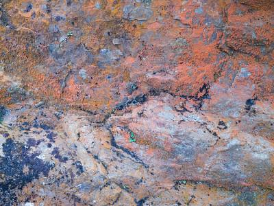 Lichen near the lighthouse - Point Reyes, CA, USA