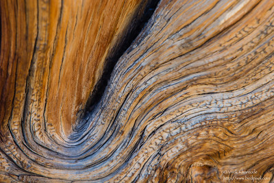Abstracts - Ancient Bristlecone Pine Forest - Lone Pine, CA, USA