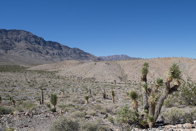 Joshua trees on the road to Racetrack Playa - Death Valley National Park, CA, USA