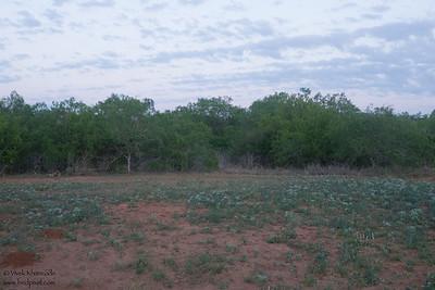 Far away background as seen from the blind at Laguna Seca Ranch - Edinburg, TX, USA
