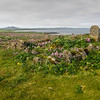 Pribilof Islands