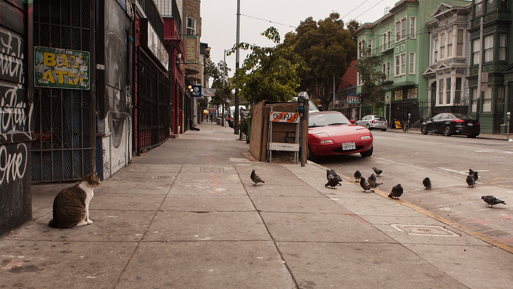 Cat Amongst the Pigeons, Lower Haight