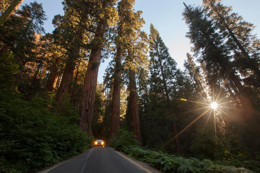 Gateway Flare, Sequoia
