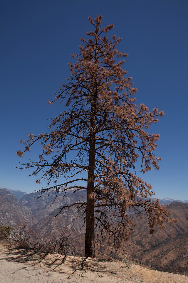 Fire Cycle, King's Canyon National Park