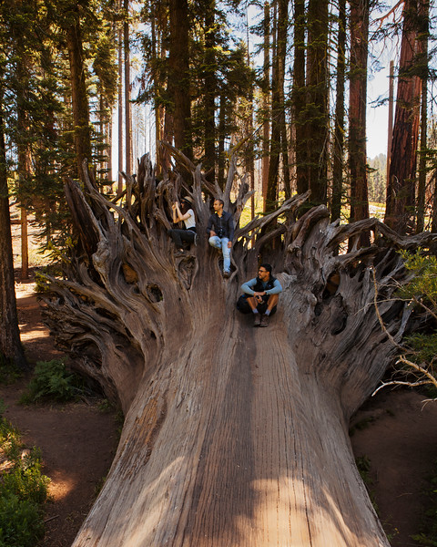 Giant slayers, Sequoia National Park