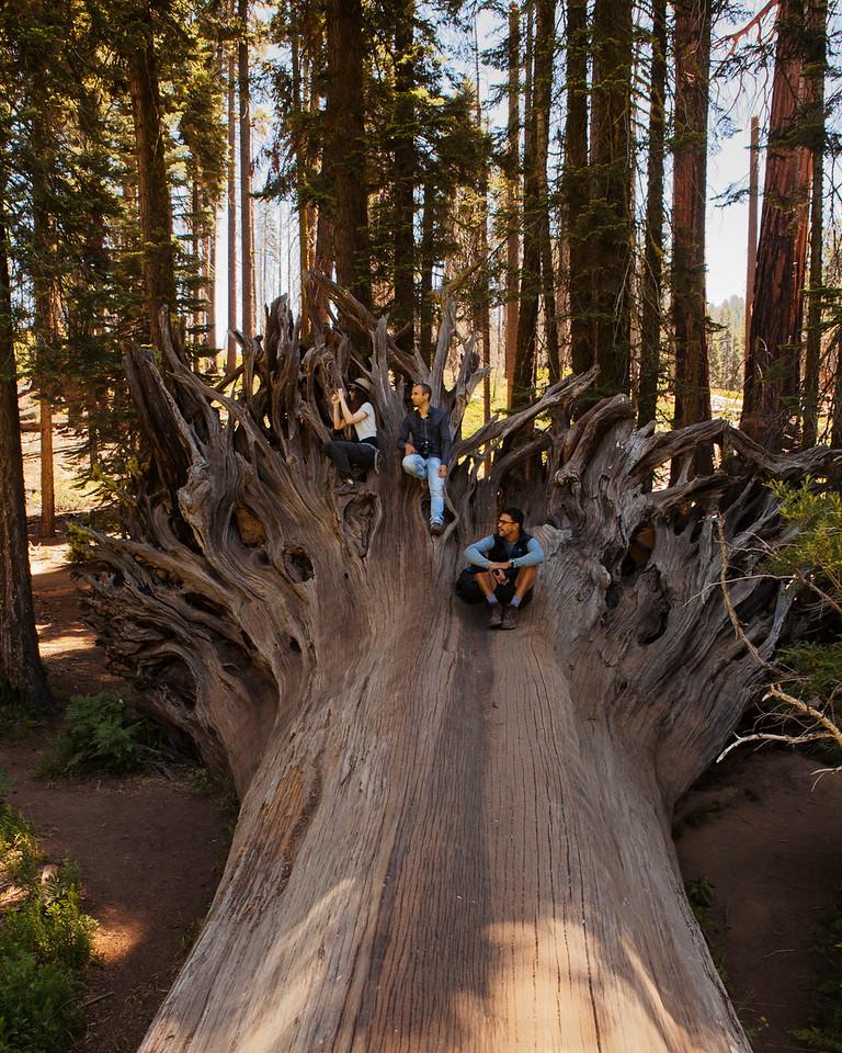 Giant slayers, Sequoia National Park