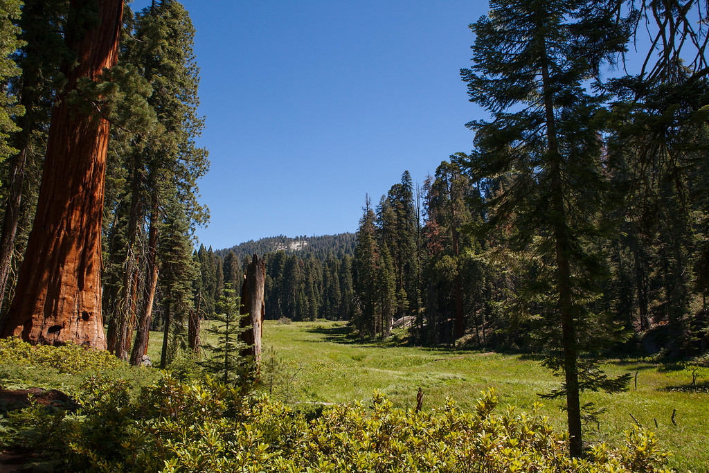 Crescent Meadow, Sequoia National Park