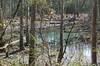 turtle habitat off of Quarry Rd.
