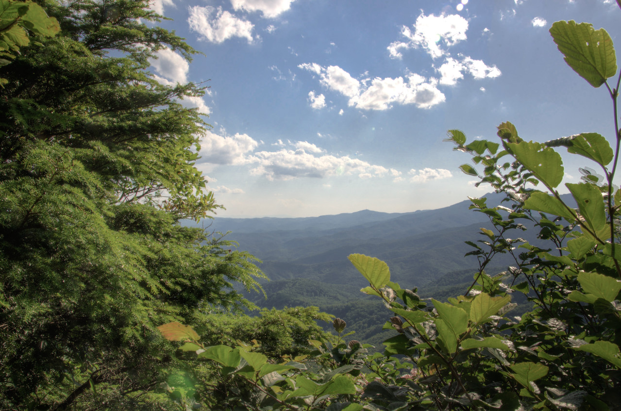 Blowing Rock - Through the Trees