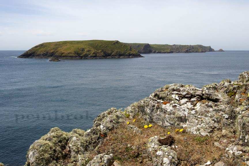 Skomer Island, from Deer Park.