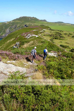 Pembrokeshire Coast Path at Pwll Deri
