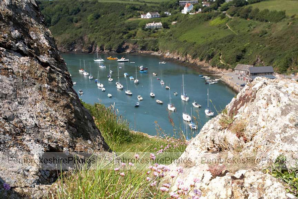 The Gribin, Solva.