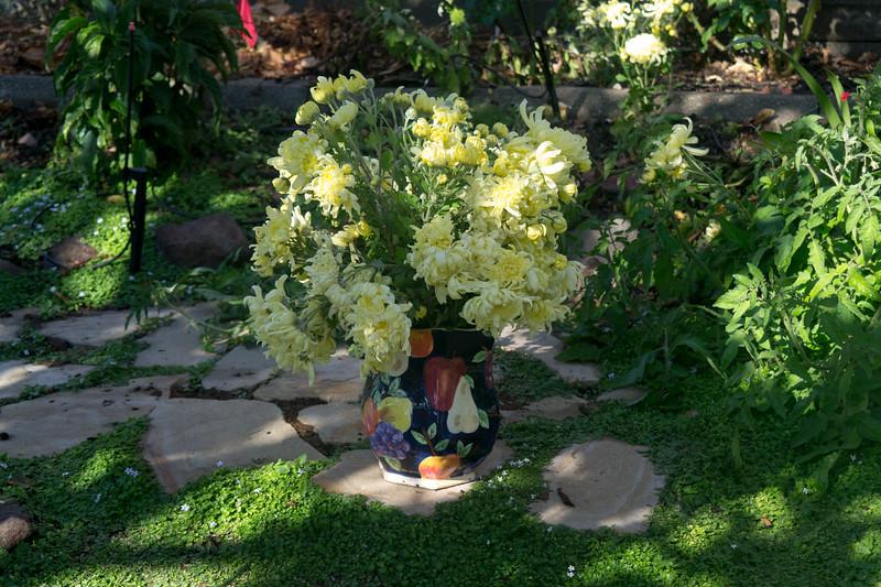 4925 Chrysanthemums