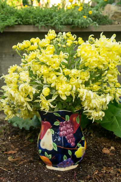 4924 Chrysanthemums