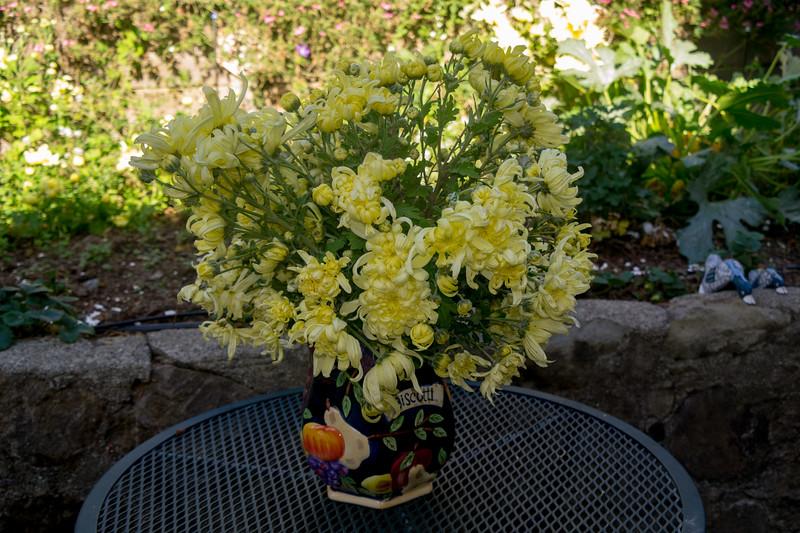 4908 Chrysanthemums
