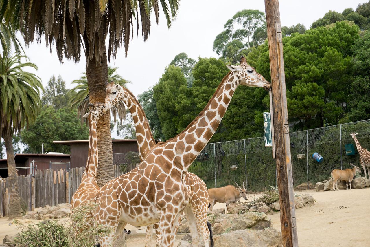 269 Giraffes