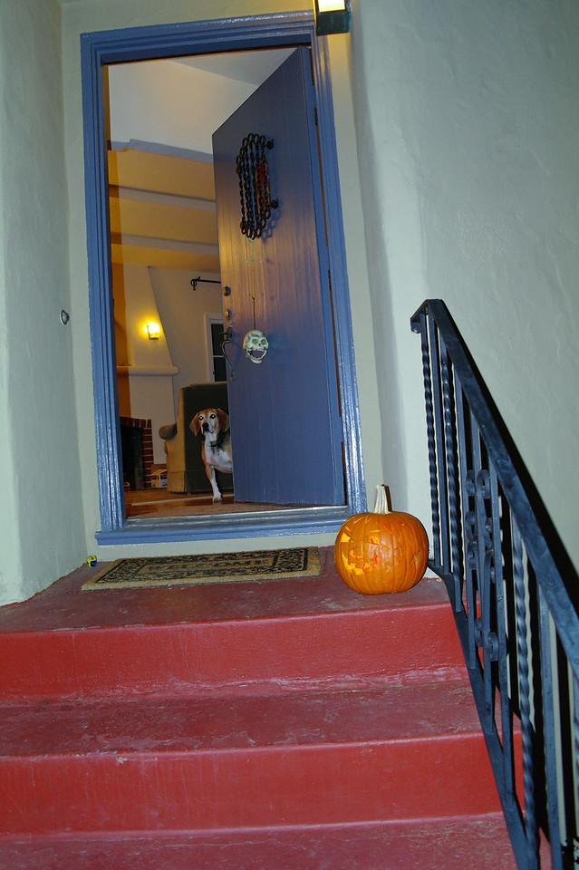 779 Max pumpkin