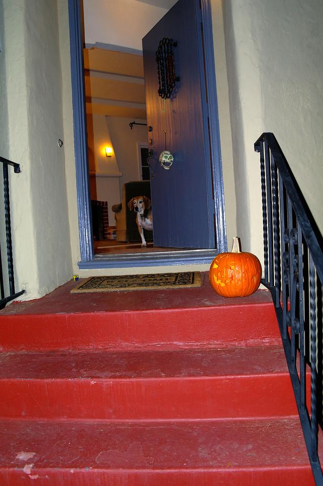 778 Max pumpkin