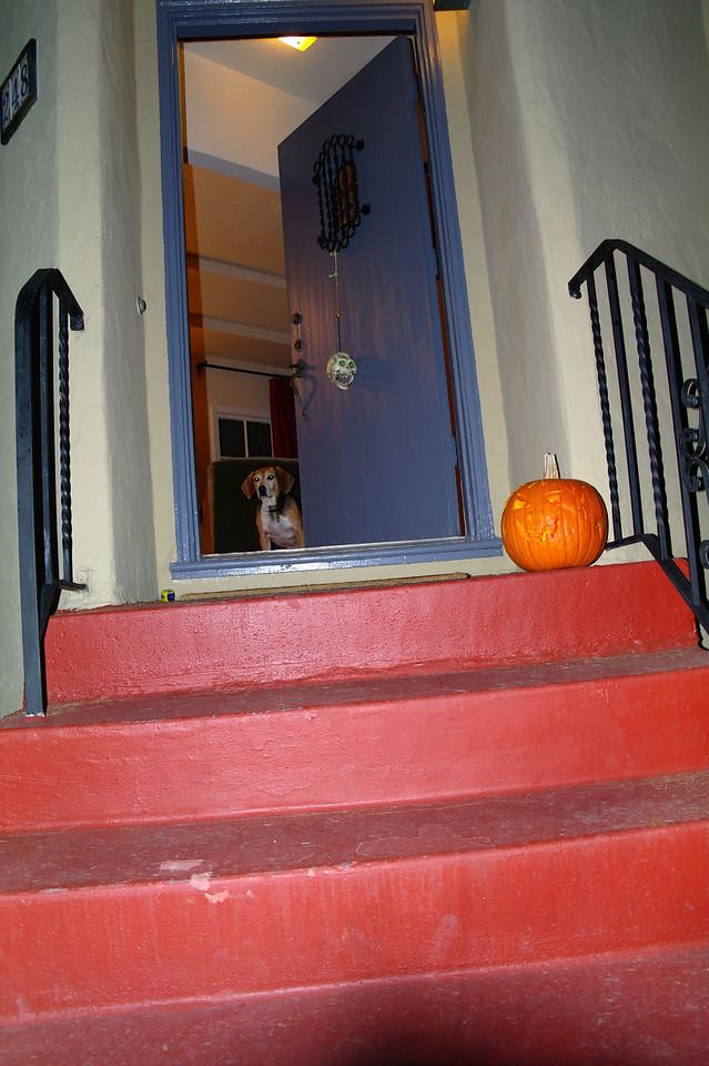 780 Max pumpkin