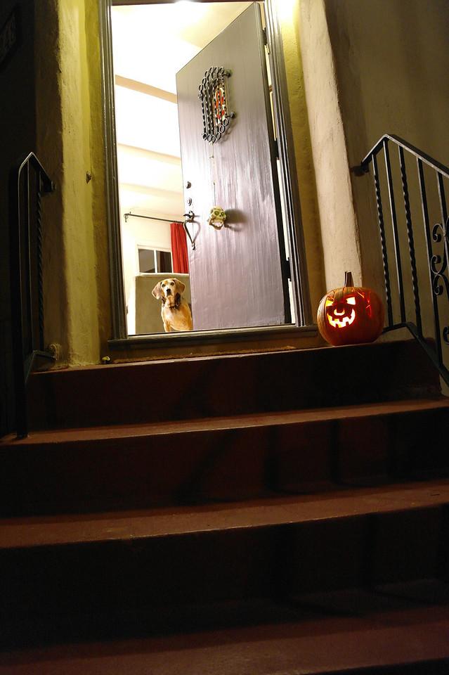 781 Max pumpkin