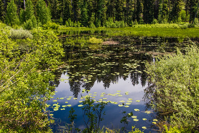 flooded meadow.  Ponderosa state Park, Idaho.