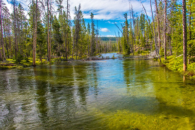 Outlet from Redfish lake floods the forest floor.  Idaho.
