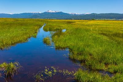 Flooded field with sawtooth mountains in background.  Lake Fork, Idaho.