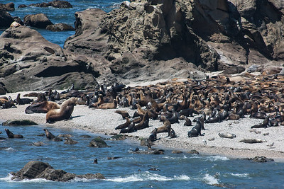 Sea lions near Sunset beach Oregon