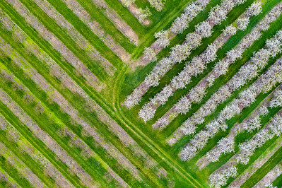 Old Mission Farms from Above