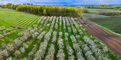 Cherry TreeRows Aerial