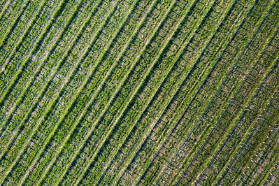 Winery in Spring from Sky