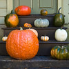 An autumn display of a variety of pumpkins.
