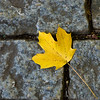 Closeup of a leaf on the cobblestone walkway.