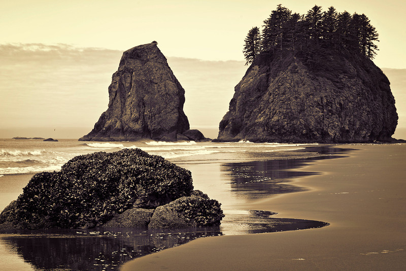 Second beach, Olympic Peninsula