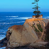 Lone Pine, Oregon Coast