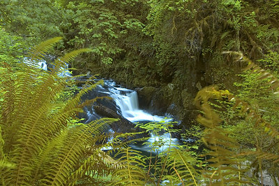 Sweet Creek Trail, Mapleton, Oregon  The Sweet Creek Trail packs a lot of interesting scenes in a short distance.  I wanted to capture the small waterfall using the bushes as a framing device.