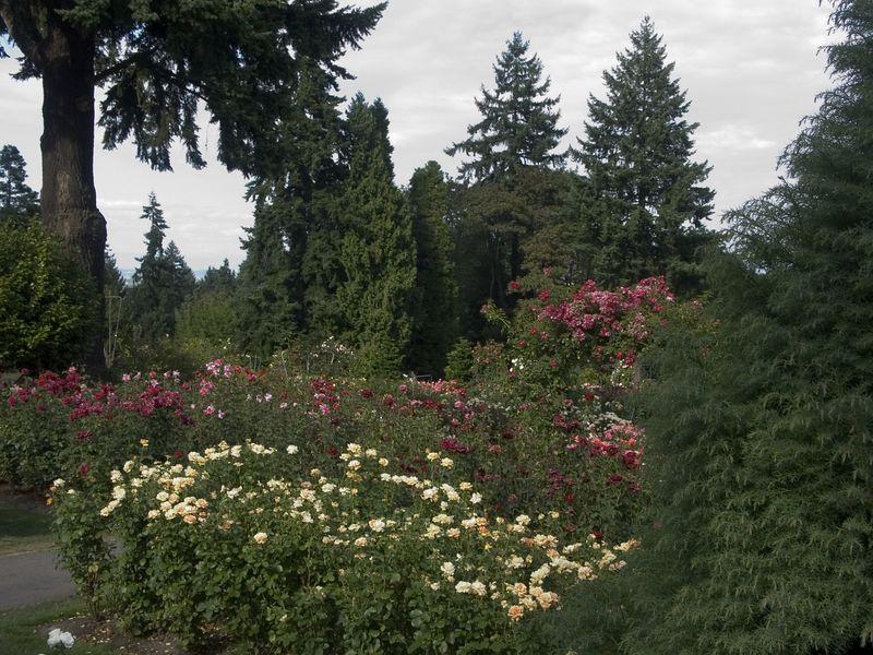 023Test Rose Garden