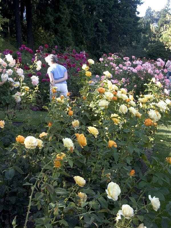 030Test Rose Garden