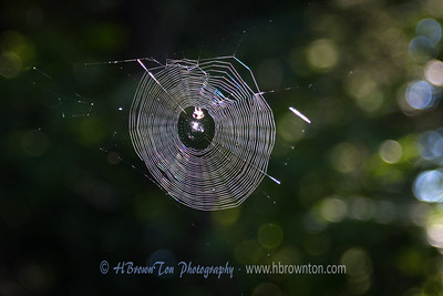 Radiant web in the sun