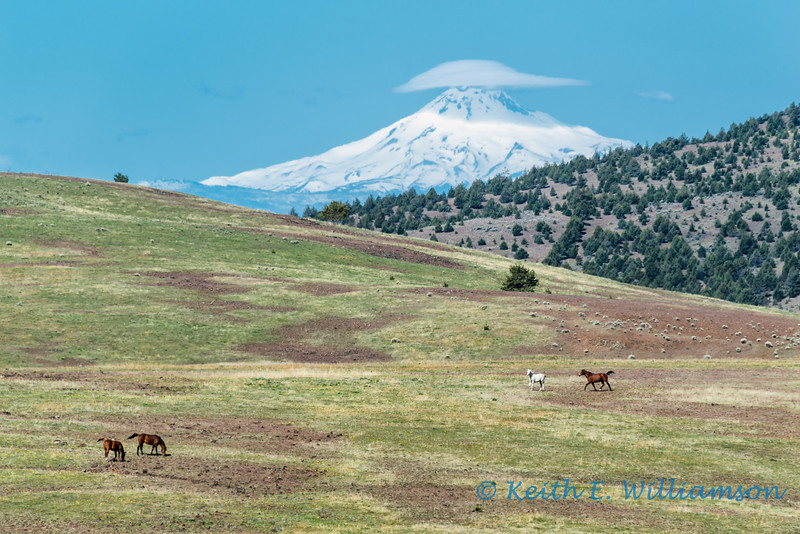 Horse meadows, and Mount Jefferson