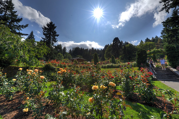 Portland's Rose Gardens