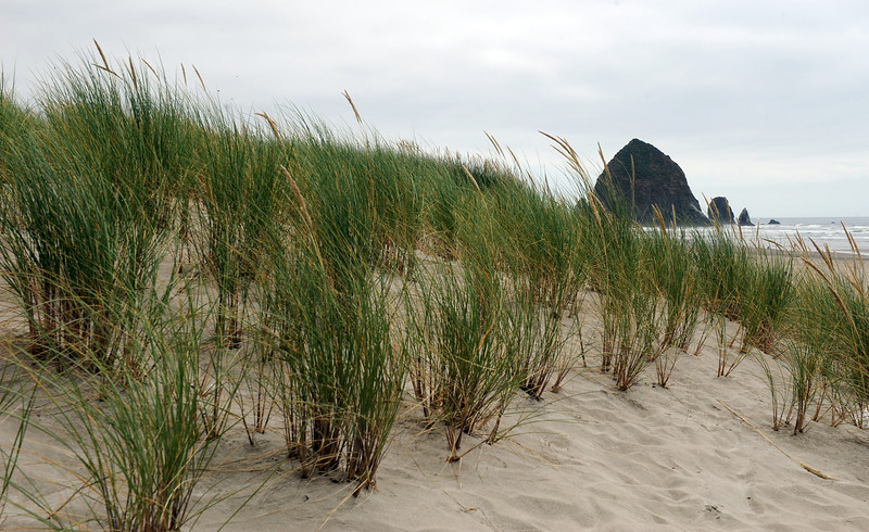 Dunes at Cannon Beach